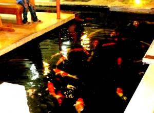 Koleksi ikan di kolam baik untuk mata dan hati